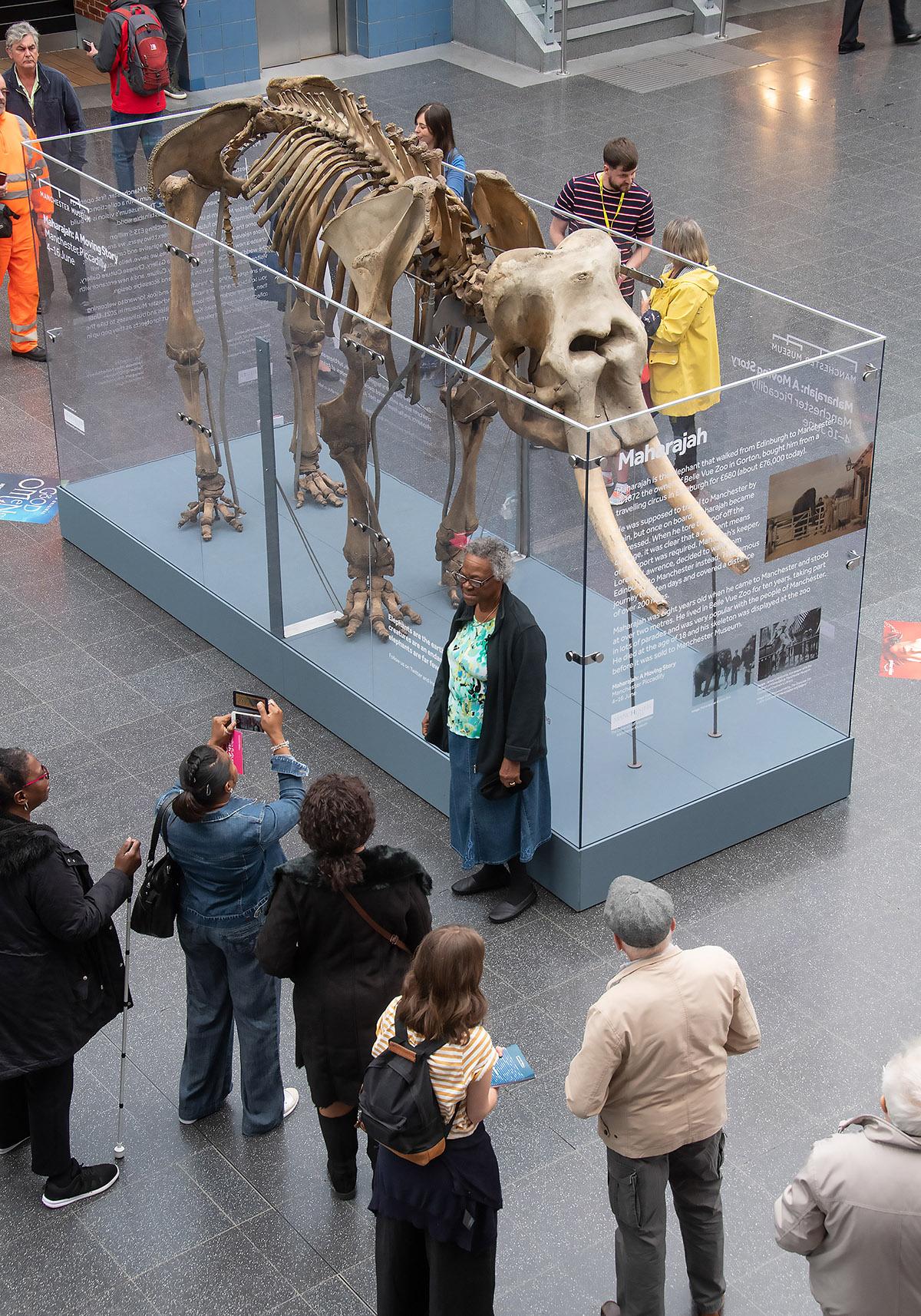 Elephant Manchester Museum